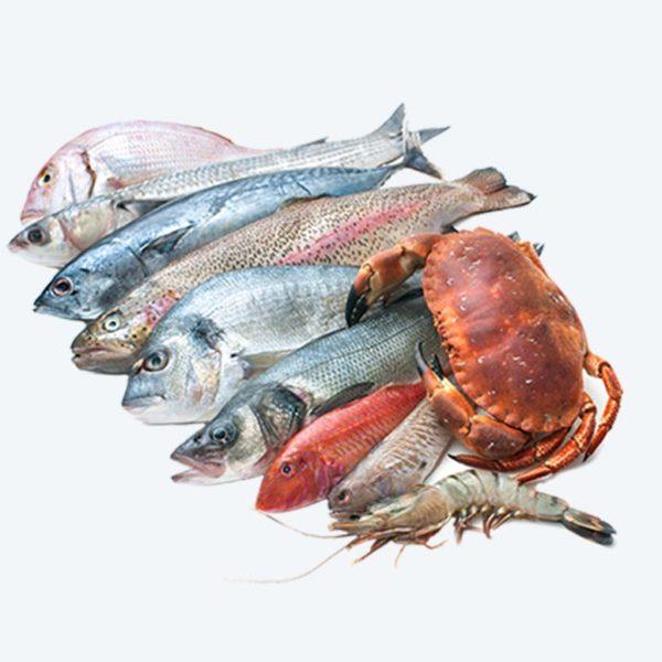 abt-fish